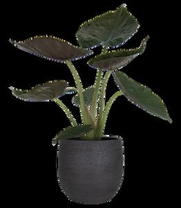 Bilde av Hemera Keramikkpotte Antrasitt 29 cm
