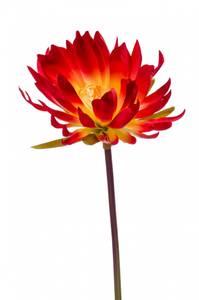 Bilde av Kunstig Kaktus Stilk Oransje 79cm