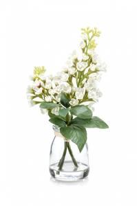 Bilde av Syrinblomst Hvit i Glass 22cm