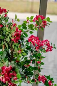 Bilde av Kunstig Bougainvillea Fuchsia 115cm