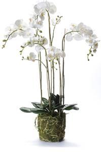 Bilde av Kunstig Orkide Hvit i Mose 130cm
